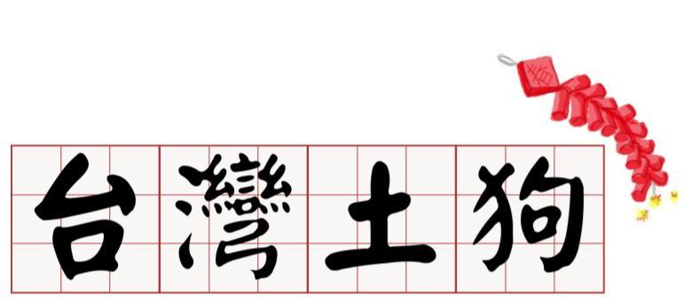 台灣土狗過新年